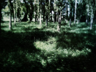 Les rencontres Photographiques de ViaSilva